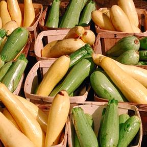 USDA_summer_squash.jpg
